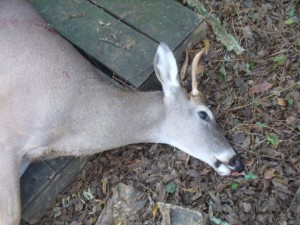 My Spike Buck